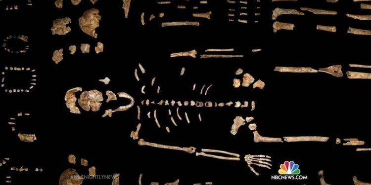 Scientists Reveal Homo Naledi